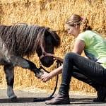 chiropractie paarden