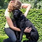 Chiropractie honden